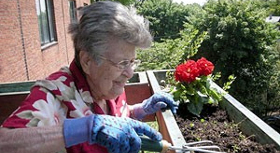 An old lady doing gardening