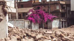 Tree with flowers amongst rubble