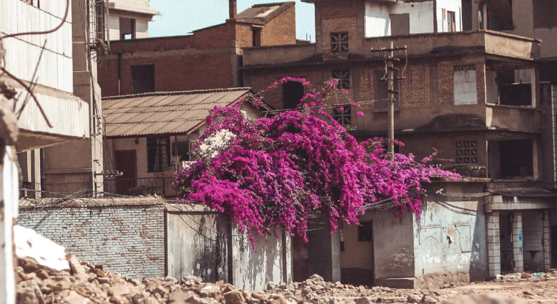 Flowers in rubble